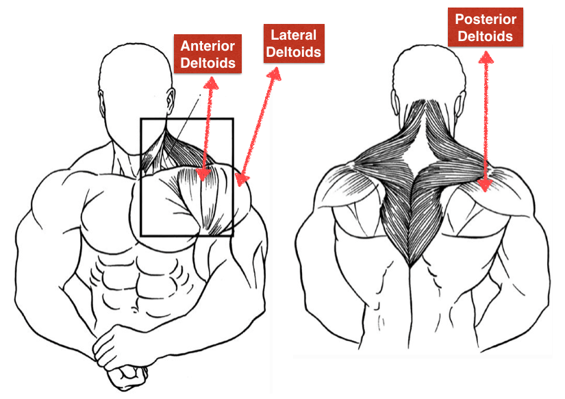 Lateral Raises Bent Over Lateral Raises For Rear Deltoids