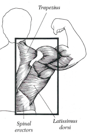 8 Best Back Exercises to Build Muscle Mass