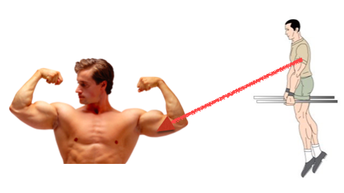 Parallel Bar Dip To Build Muscle