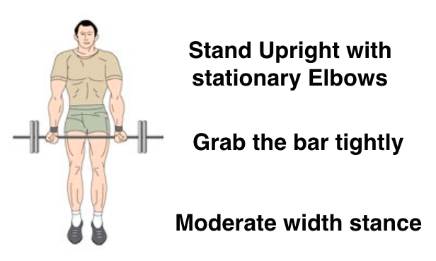 Barbell Biceps Curls for Bigger, Muscular Arm Muscles
