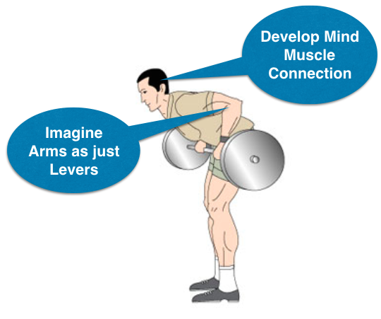 Rows exercise muscles