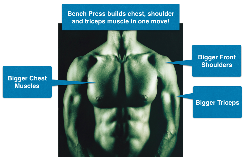 How to Perform Bench Press Exercise for Bigger Chest Muscles