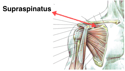 4 Best Rotator Cuff Exercises For Strong Injury Free Shoulders
