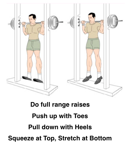 Calf raises standing seated donkey calf raises for Floor y raise