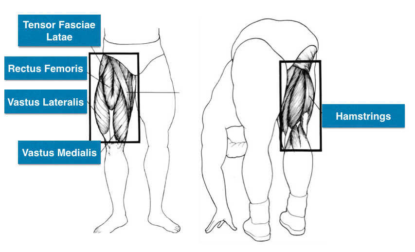 8 Best Leg Exercises To Build Bigger Muscular Legs