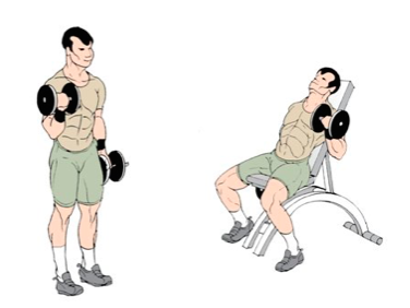 how to build biceps without weights wikihow